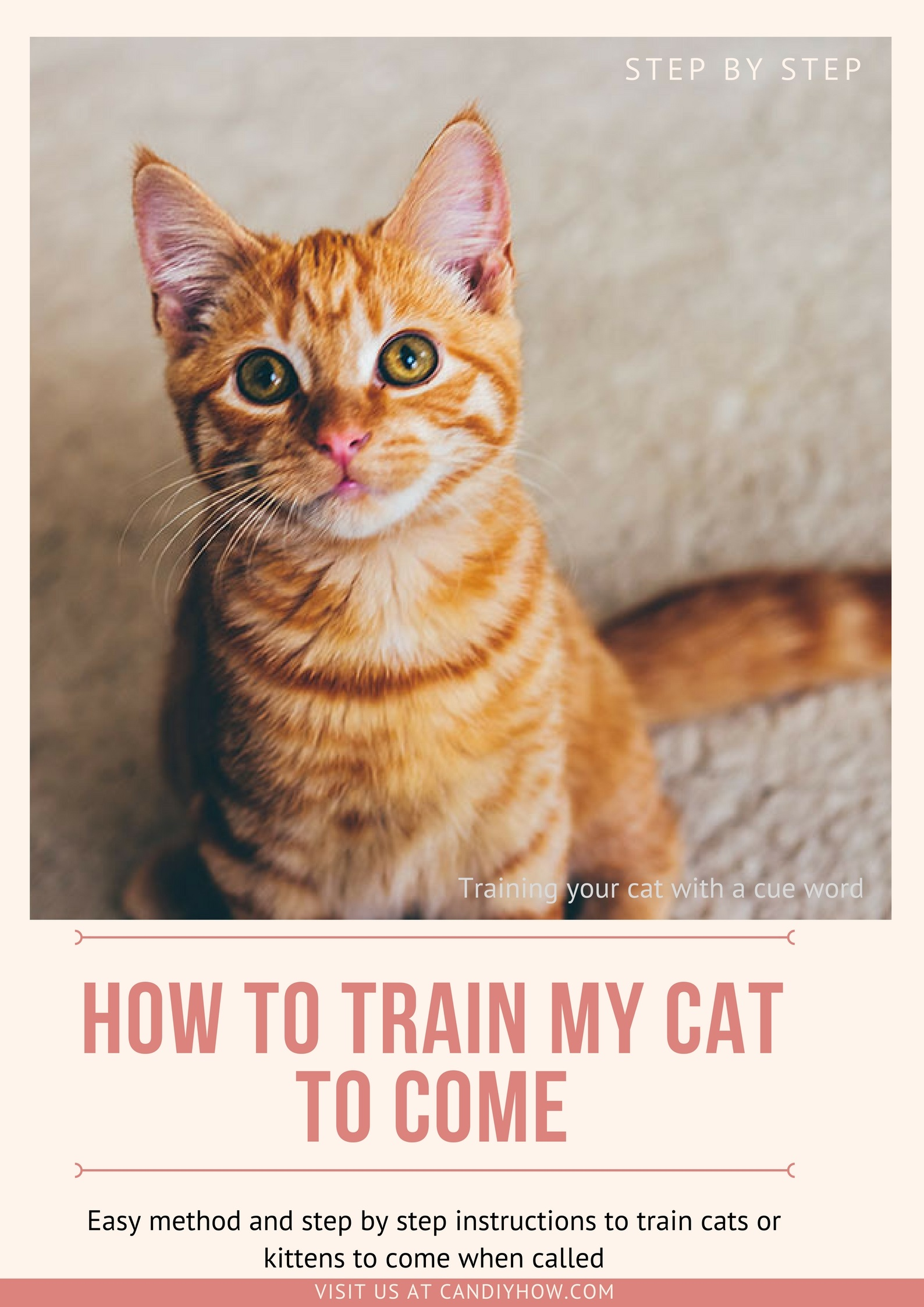 urinary tract foods for cats